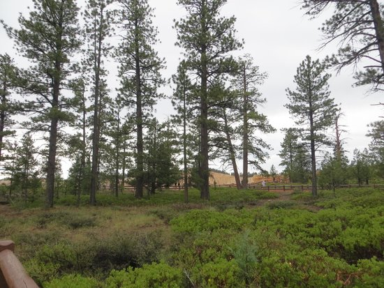 Bryce Canyon: Turn... and there's forest