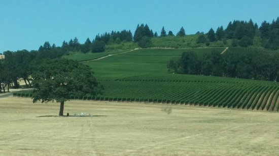 Stoller Family Estate: Lone tree with chairs in the shade