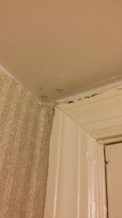 Days Inn Charleston Historic District : mold in bathroom