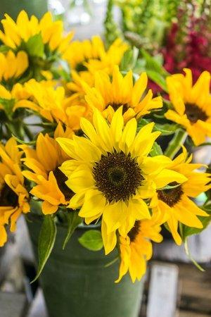 Ithaca Farmers Market: sunny sunflowers