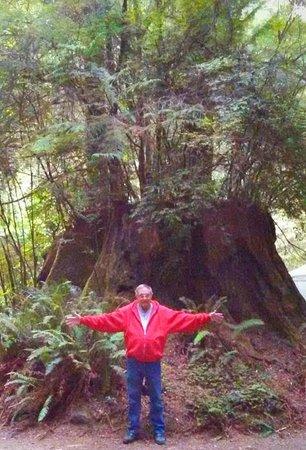 The Redwoods RV Resort: Huge trees in park