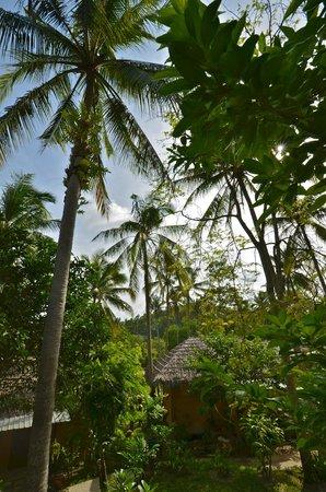 Ban Sainai Resort Aonang- Thailand: Unter Palmen...