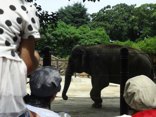 Ueno Zoo: Elephant
