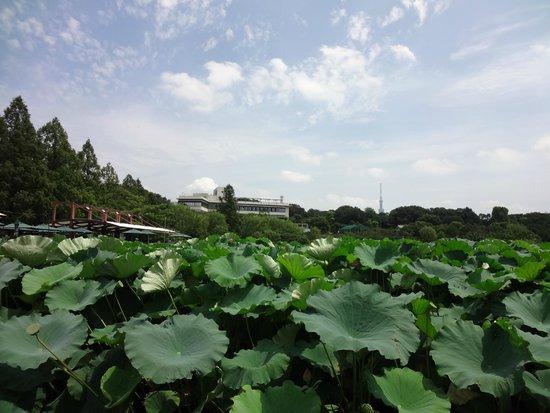 Ueno Zoo: Pond