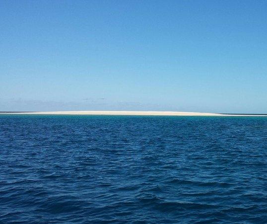 Ocean Safari: White sands of the Reef