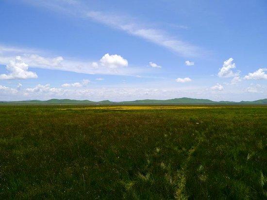 Zoige County, China: 若爾蓋(ゾルゲ)大草原
