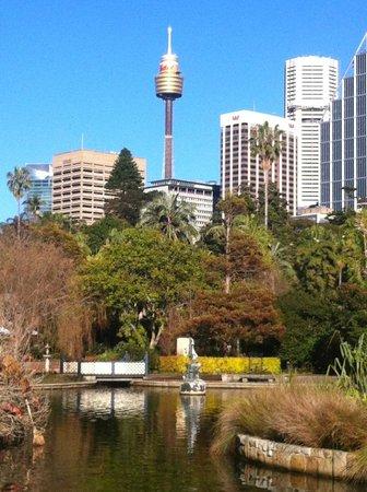 The Royal Botanic Garden : city view