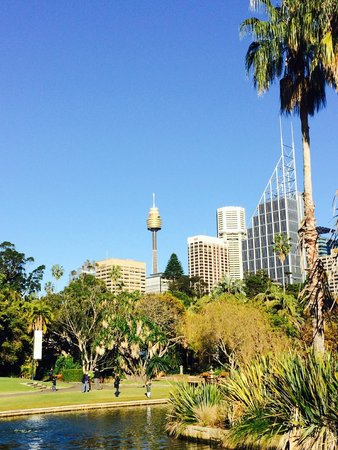 The Royal Botanic Garden : City view