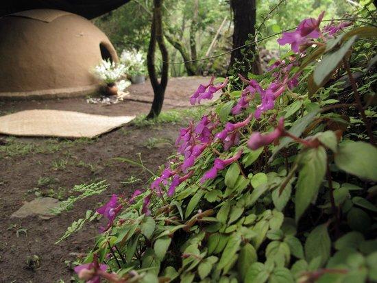Copalli Malinalco: Temazcal