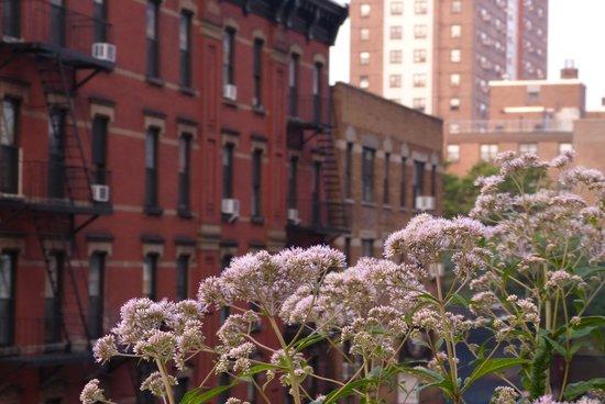 High Line : のんびりタイム♪