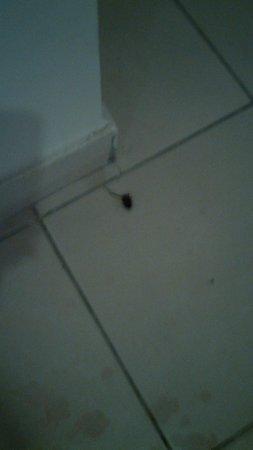 Sharm El Sheikh Marriott Resort: cockroach in front of my room door