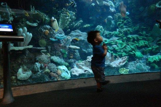 Shedd Aquarium: Inside aquarium