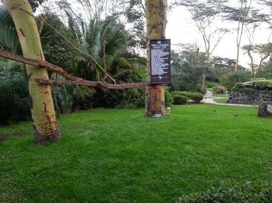 Sarova Lion Hill Game Lodge: Bird perching branch!
