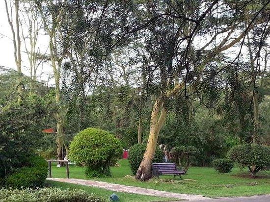 Sarova Lion Hill Game Lodge: hotel grounds