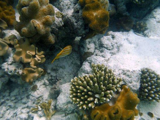 Alimatha Aquatic Resort: fondale