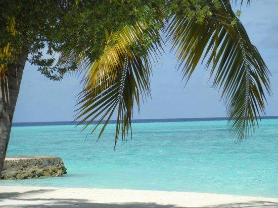 Alimatha Aquatic Resort: mare