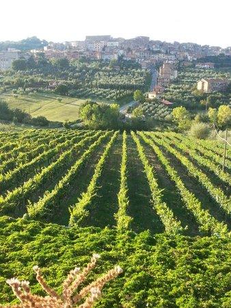 Agriturismo La Pietriccia: La vigna