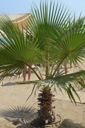 Royal Dragon Hotel : Palm trees on the beach