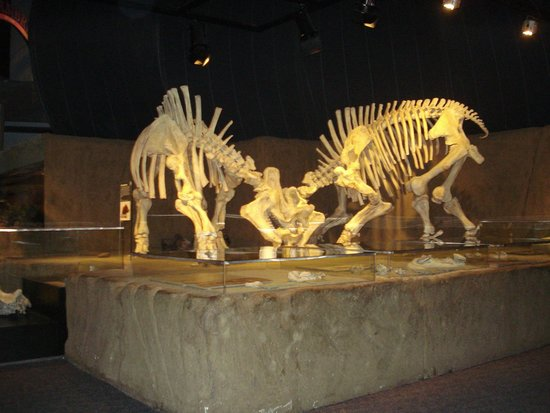 Royal Tyrrell Museum of Palaeontology : Royal Tyrrell Museum