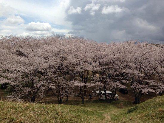 Akeai Tomb: Sakura