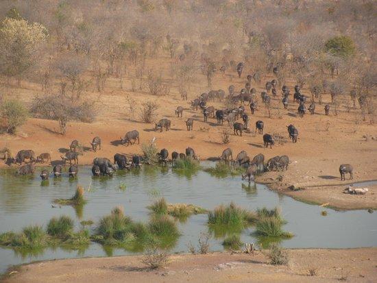 Victoria Falls Safari Lodge: View from the hotel