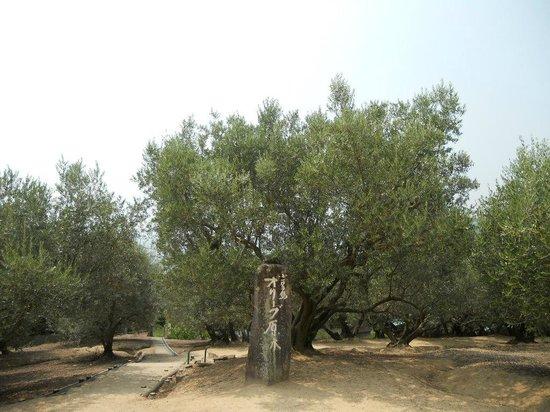 Olive Garden : 原木