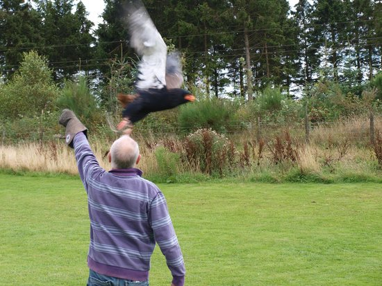 Phoenix Falconry: To do this for the first time is thrilling