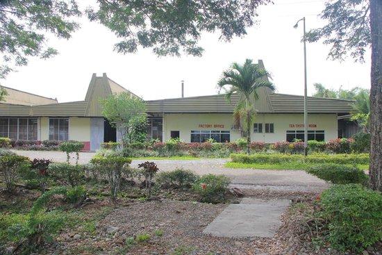 Sabah Tea Garden: The tea factory