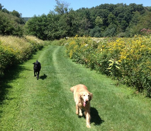 Morris, NY: On a path near field of dreams