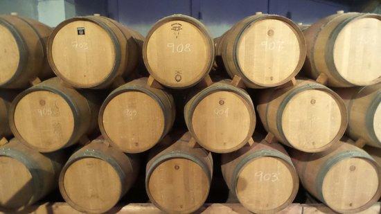 Finca Viladellops: The cellar
