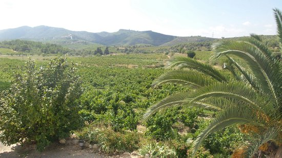 Finca Viladellops: View from the terrace.