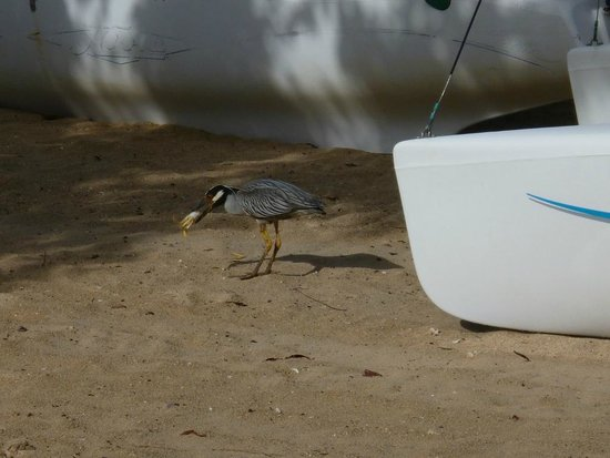 Coyaba Beach Resort: At least somebody got to eat some crab