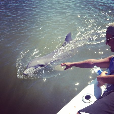 Best Dolphin Tours Hilton Head