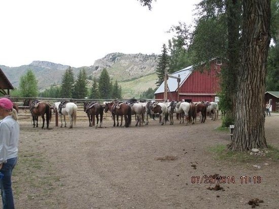 Spotted Horse Ranch: all saddled up and ready to go