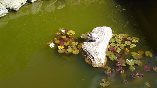 SwissHouse Apartments & Spa: View of the garden pond