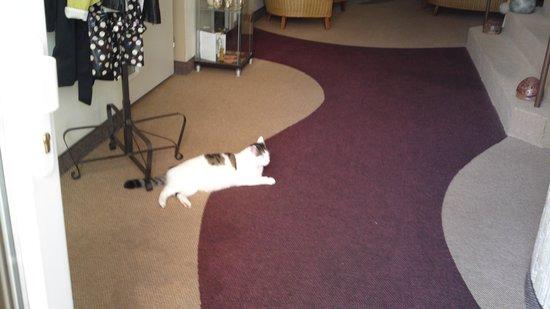 SwissHouse Apartments & Spa: Friendly cat!