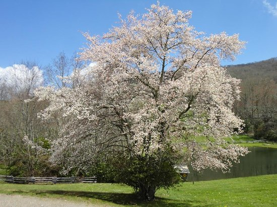 The Cataloochee Ranch : Springtime makes for a beautiful backdrop.