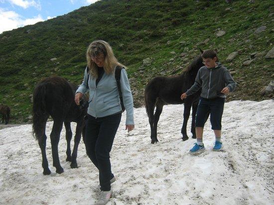 Rifflsee: Horses on the snow