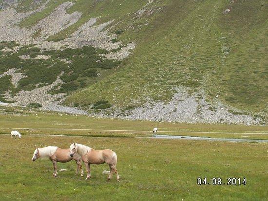 Rifflsee: Ponies - grazing area