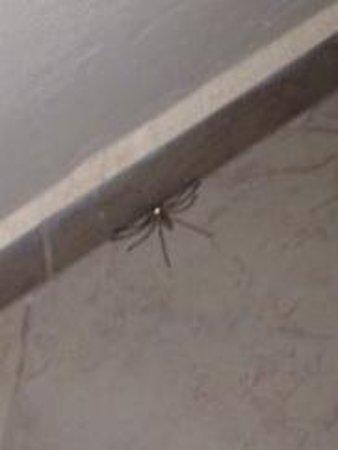 Zoes Hotel : Ragno enorme trovato dalla porta della nostra camera che cercava di entrare . No comment!