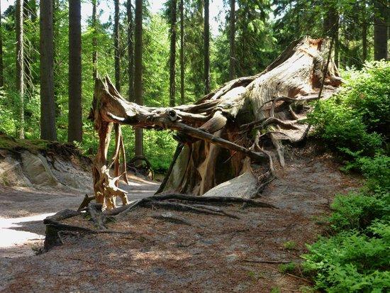 Adrspach-Teplice Rocks: the woods