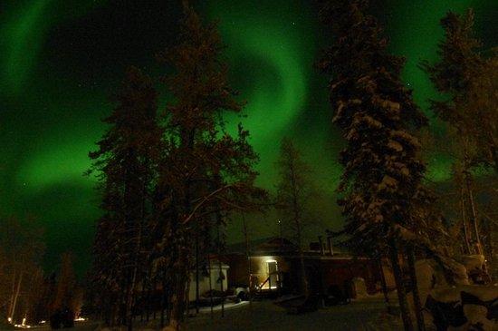 Aurora Village: 針葉樹とオーロラ