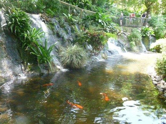 Jardin botannique picture of jardin botanique de for Jardin botanique guadeloupe