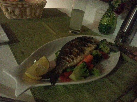 Pirouni : Fish of the day