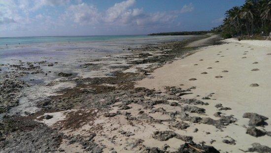 Reef & Beach Resort Zanzibar: Het strand