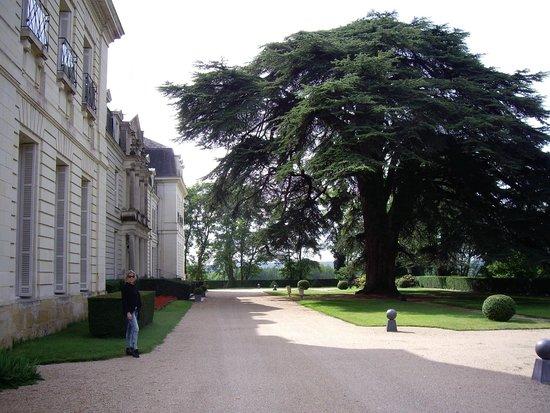 Chateau de Rochecotte: Hotel entrance