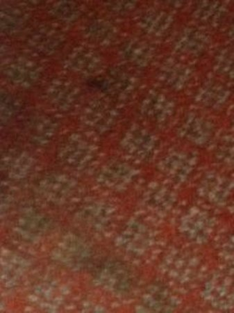 MaeMar Hotel: stains all over the carpet
