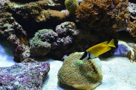 L'Aquarium de Barcelona : Рыбка