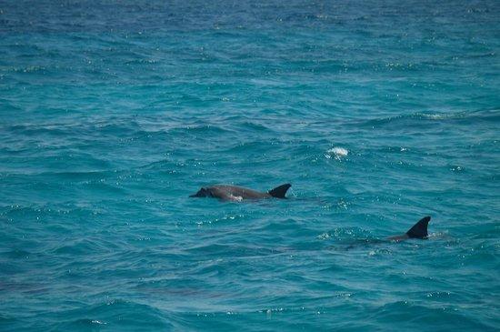 Jaz Bluemarine : Dolphin trip