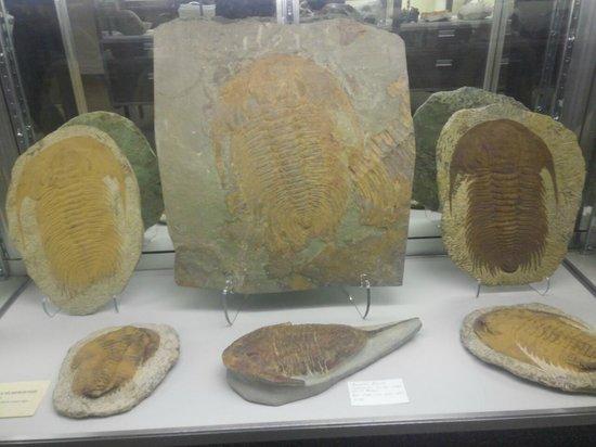 Stones 'n Bones Museum: fossils